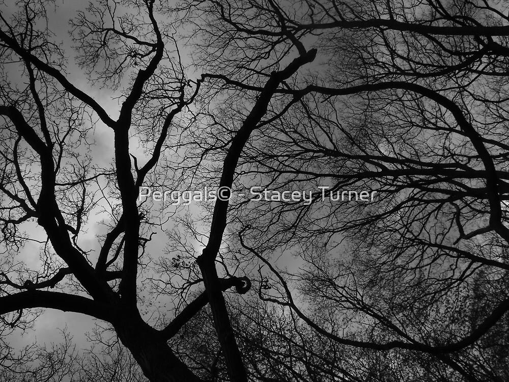 Darkened forest by Perggals© - Stacey Turner