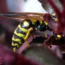 burgundy buzz! by Adair  Davidson