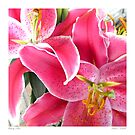 Amazing Lillies  by Sandra Russell