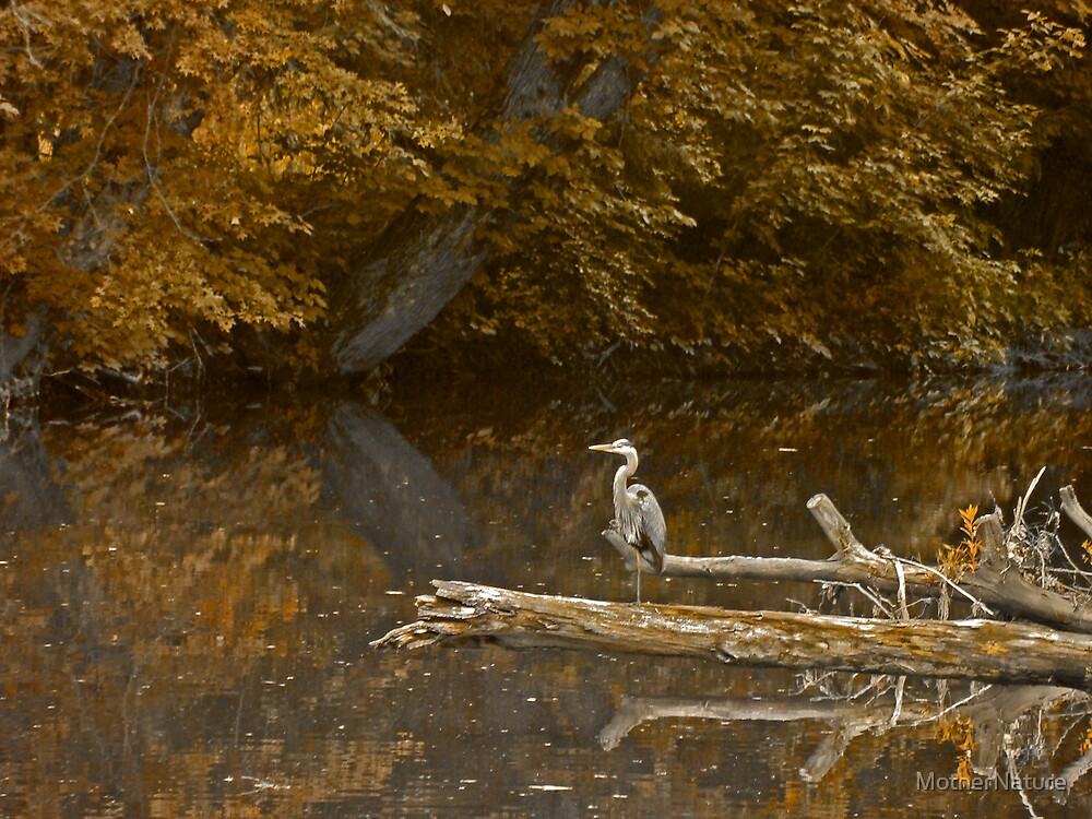 Heron at Hickory Run by MotherNature