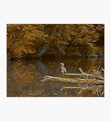 Heron at Hickory Run Photographic Print