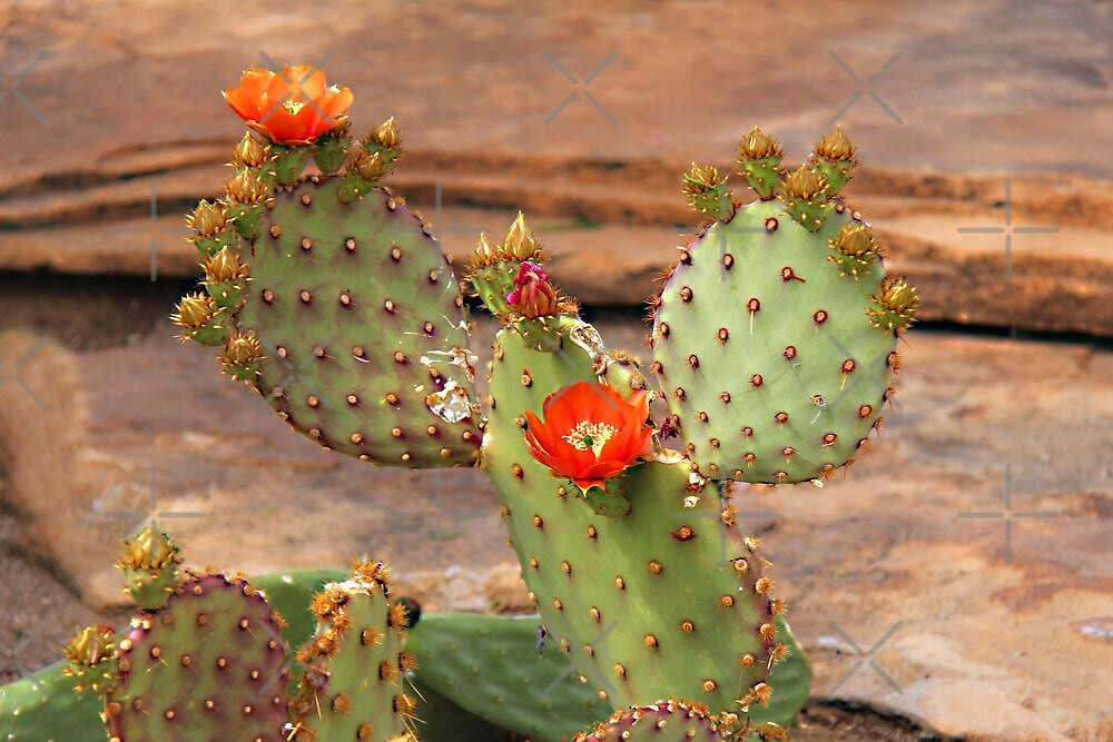 Prickly Pear Cactus by Vickie Emms