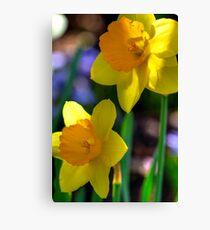 Daffodils in Denver Canvas Print