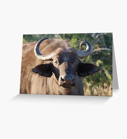 NOBODY IS PERFECT ! The Buffalo - Syncerus caffer (Buffel0 Greeting Card