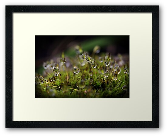 The Magic and Mystery of Microscopic Moss by Clare Colins