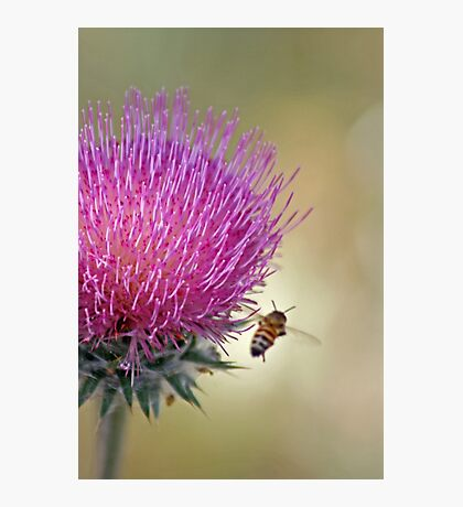 Buzzing Along --A Bee's Journey Photographic Print