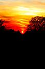 Red sunset vertical by Jasna