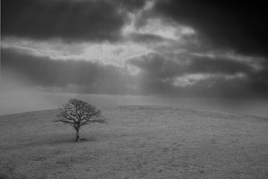 Tree on the hill by mphphoto