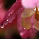 Droplets in pink by PhotoTamara