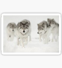 Timber Wolf Pack Sticker