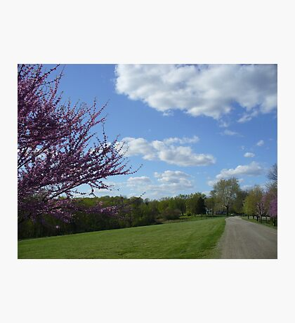 Country Garden Path in Spring Photographic Print