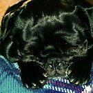 sleepy pup by Jamie McCall