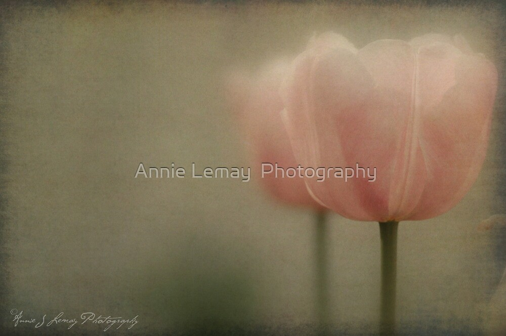 Sitting Pretty by Annie Lemay  Photography