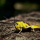 Not so mellow in yellow.... by Paul Moore