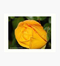 macro flora 005 Art Print