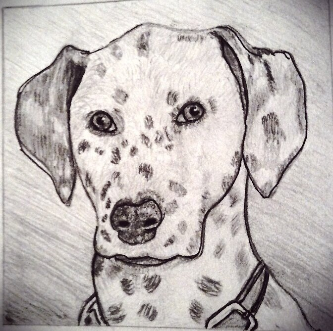 Dalmation by PitreDish08