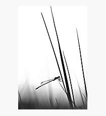 Dragon Fly- BW  Photographic Print