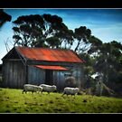The Old Shed by Greg Earl