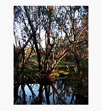 Wooroloo Brook Photographic Print