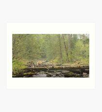 Spirit of the Great Bear Rainforest Art Print
