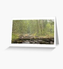 Spirit of the Great Bear Rainforest Greeting Card
