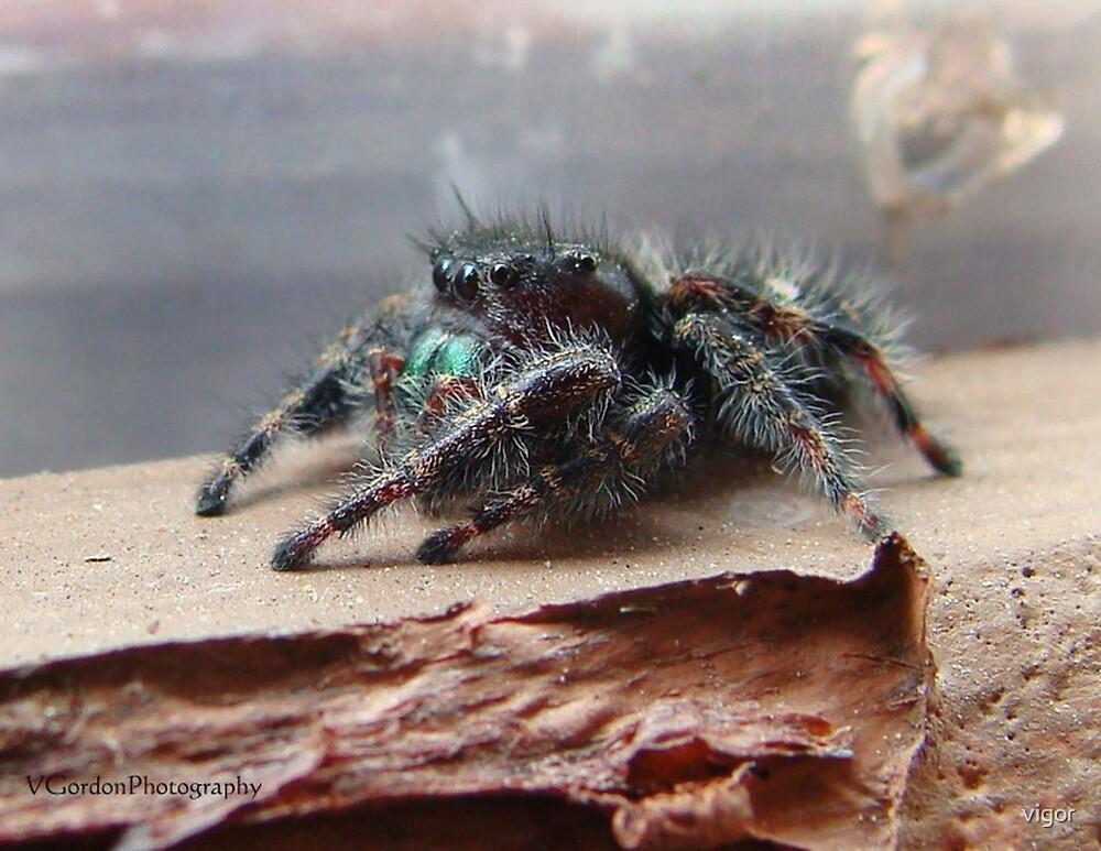 Boris the Spider or Arachnid by vigor