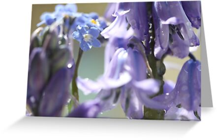 FORGET ME KNOTS AND BLUEBELLS by Gea Austen