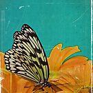 Resting Flutter by oddoutlet