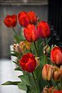 Tulip Row by Matthias Keysermann