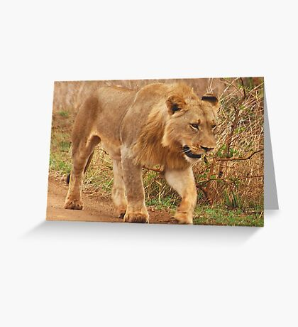 WISDOM - THE LION - panthera leo - Leeu Greeting Card