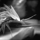 Paradise in Black and White by linaji-cards