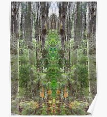 Cathedral in the Woods Poster