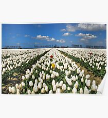 Spring on Flakkee Poster