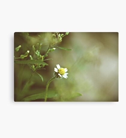 Black Jacks Canvas Print