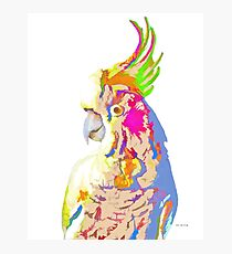 7 DAYS OF SUMMER- COCKATOO ART IN BLUE AND PEACH Photographic Print