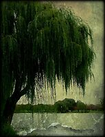 My special weeping willow tree © by Dawn Becker