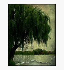 My special weeping willow tree © Photographic Print