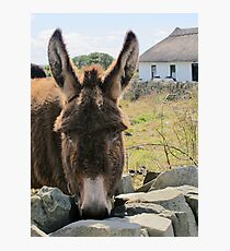 Donkey saying Hello! Photographic Print
