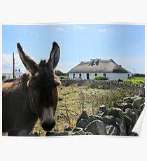 Irish Donkey Poster