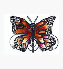 Lepidoptera  Photographic Print