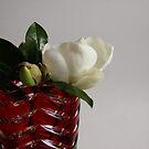White Magnolia by Magaly Burton