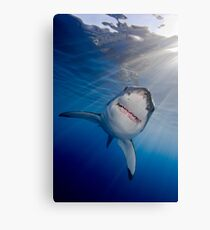 White Shark Canvas Print