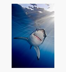 White Shark Photographic Print