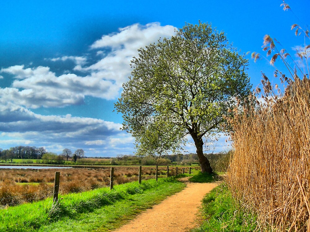 A Picture Book Countryside Scene   by hootonles