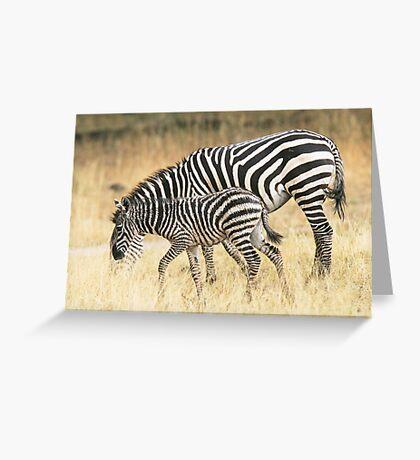 Zebras in the rain Greeting Card