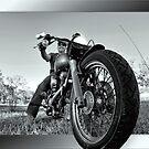 Harley by Kym Howard
