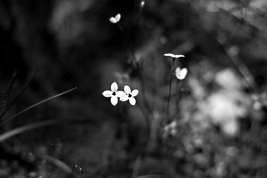 little jewels by anniephoto