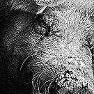 Sleeping pig by miroslava