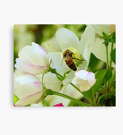 Spring May Flowers bring Pretty Bee's Canvas Print