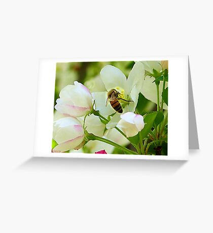 Spring May Flowers bring Pretty Bee's Greeting Card